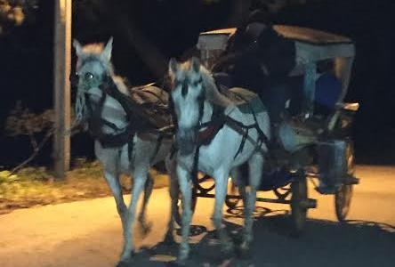 2014-1216-horse-carts