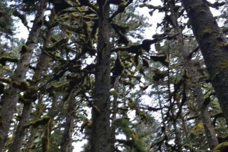 2013-0808-spruce-island10