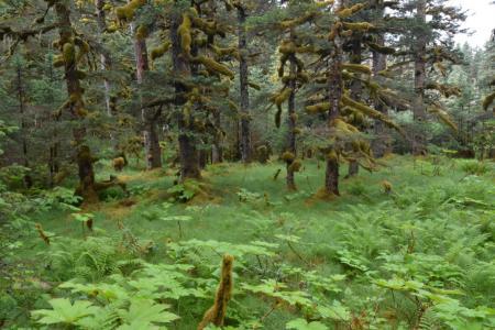 2013-0808-spruce-island12